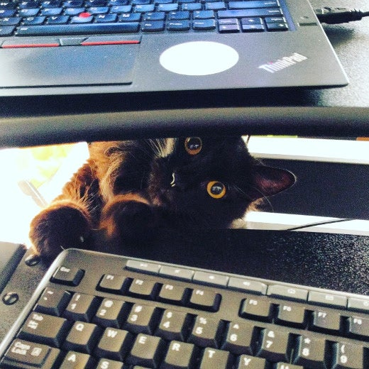 cat at keyboard