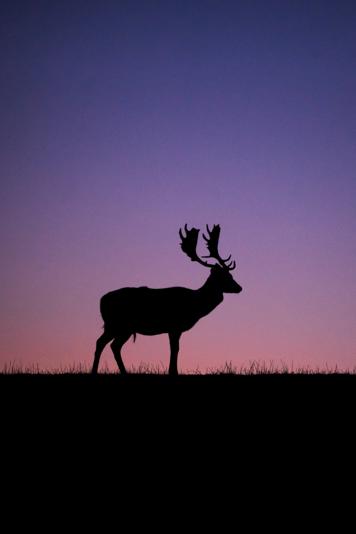 Full-color deer image