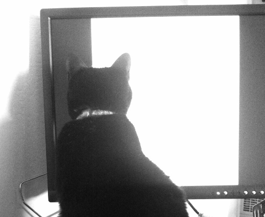 cat and monitor