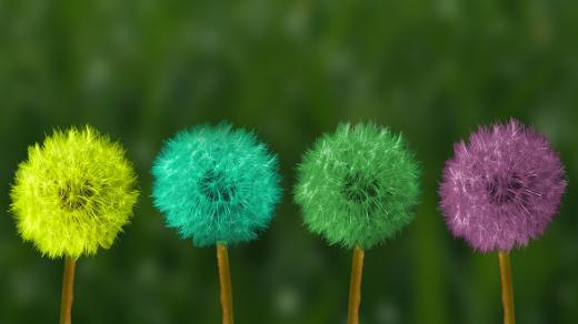 multi-colored dandelions