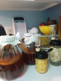 kombucha jars and other fermentations