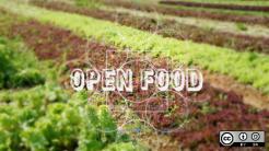 Lettuce farming field for Open Food Week