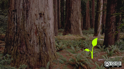 A sprout in a forest