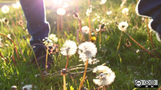 Person in a field of dandelions