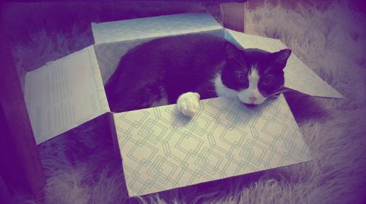 Cat dropped in a box