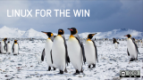 Penguins gathered together in the Artic