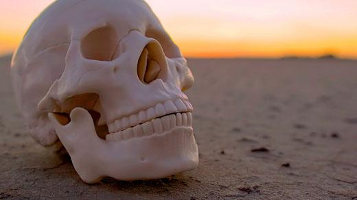 A skull in the desert