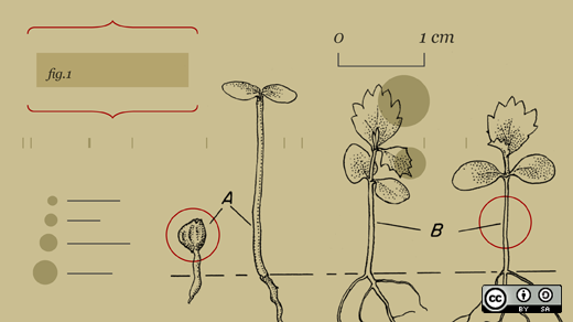 A diagram of some plants.