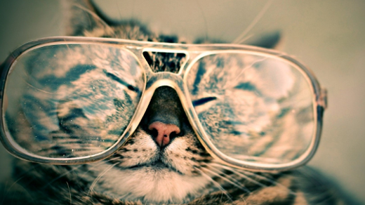Cat wearing glasses