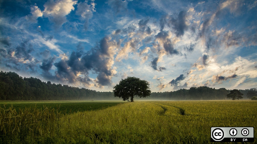 Tree in an open field with clouds