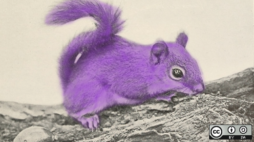 A purple squirrel looking for nuts