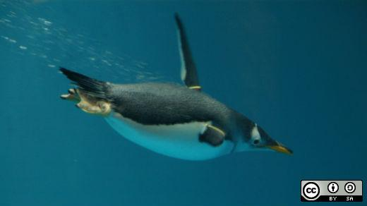 Penguin swimming under water