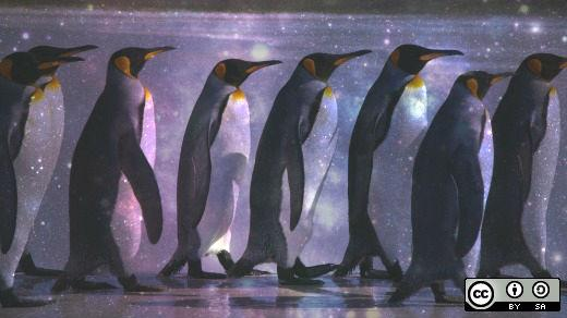 7 penguins walking in a line