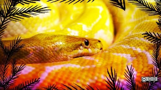 Real python in the graphic jungle