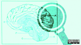 a magnifying glass looking at a brain illustration