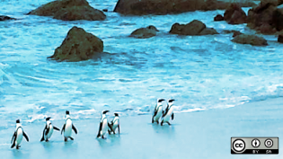 Penguins walking on the beach