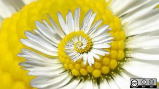 A daisy swirl
