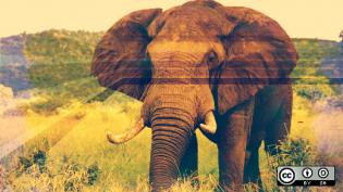 Elephant in the valley
