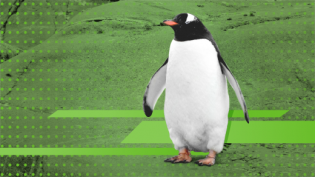 Penguin walking, green background