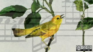 Bird singing and music notes