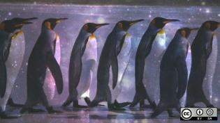 Penguins with space and stars overlay