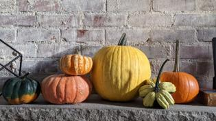 A vignette of green, orange, and yellow pumpkins in front of a brick wall