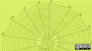 spiderweb diagram