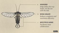 A diagram of an insect.