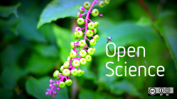 Open science plant and blossom