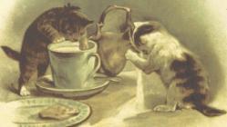 Kittens spilling milk