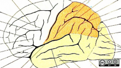 A hand-drawn brain.