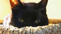 cat peeking out of a basket