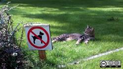 Cat laying in the grass next to a not animals allowd sign