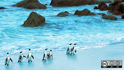 Penguins on beach