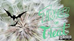 Trick or treat - bats flying on a dandelion