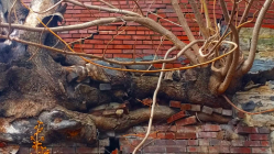 tree roots breaking through brick wall