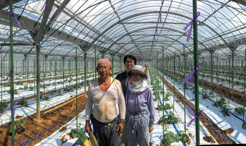 Makoto Koike with his parents at the family cucumber farm