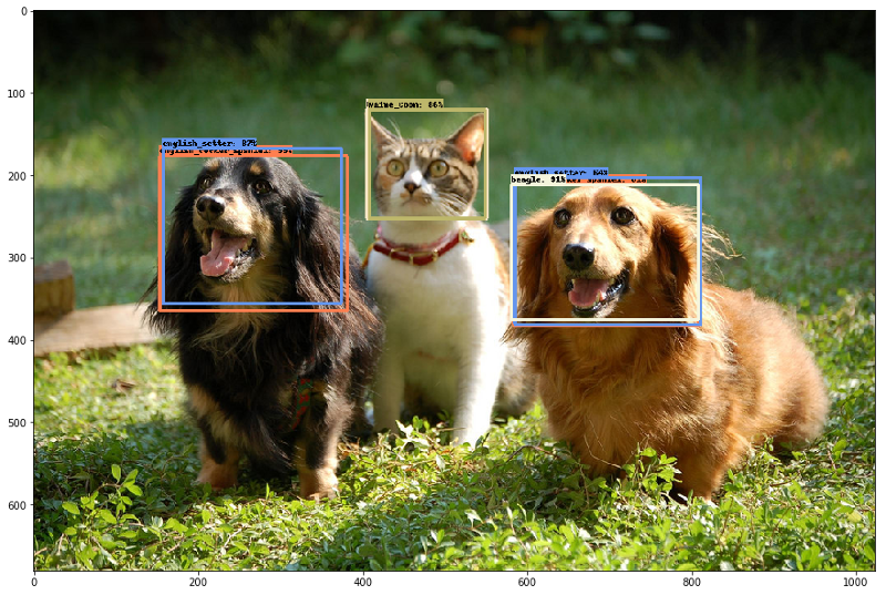 "The ""pet detector"" model, trained via transfer learning."