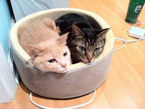 Two cats in a bed