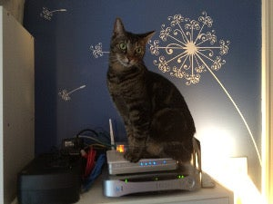 Cat sitting on a router