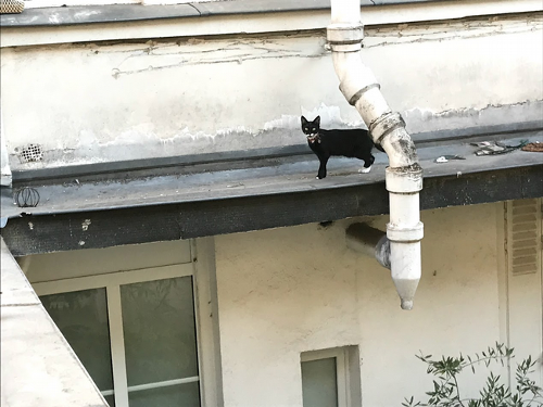 Cat standing on a roof