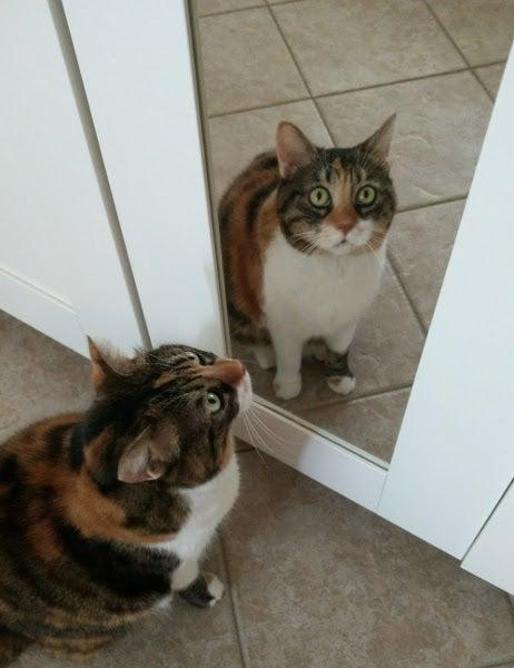 Duplicate cat