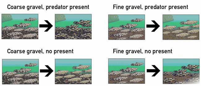 Environmental pressures on fish