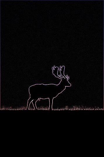 Deer image reduced by 10
