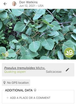 Identified plant