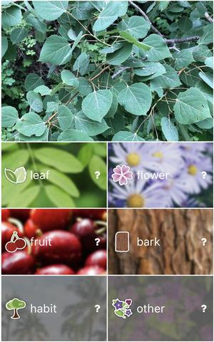 Selecting plant type to identify